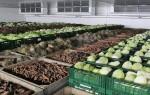 Как построить овощехранилище